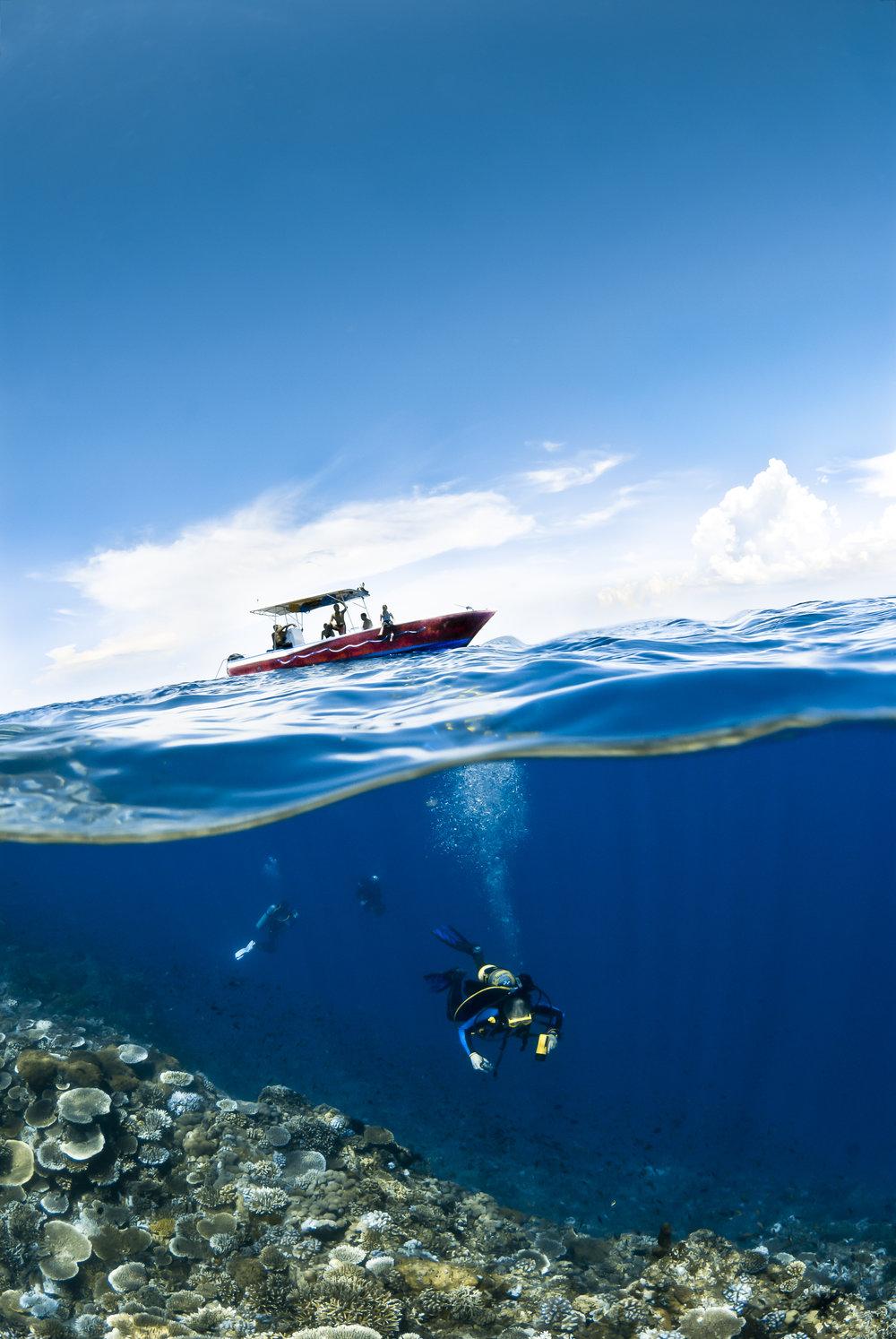 Verde Island Split-Shot (various Acropora) credit: alex tyrrell / coral reef image bank