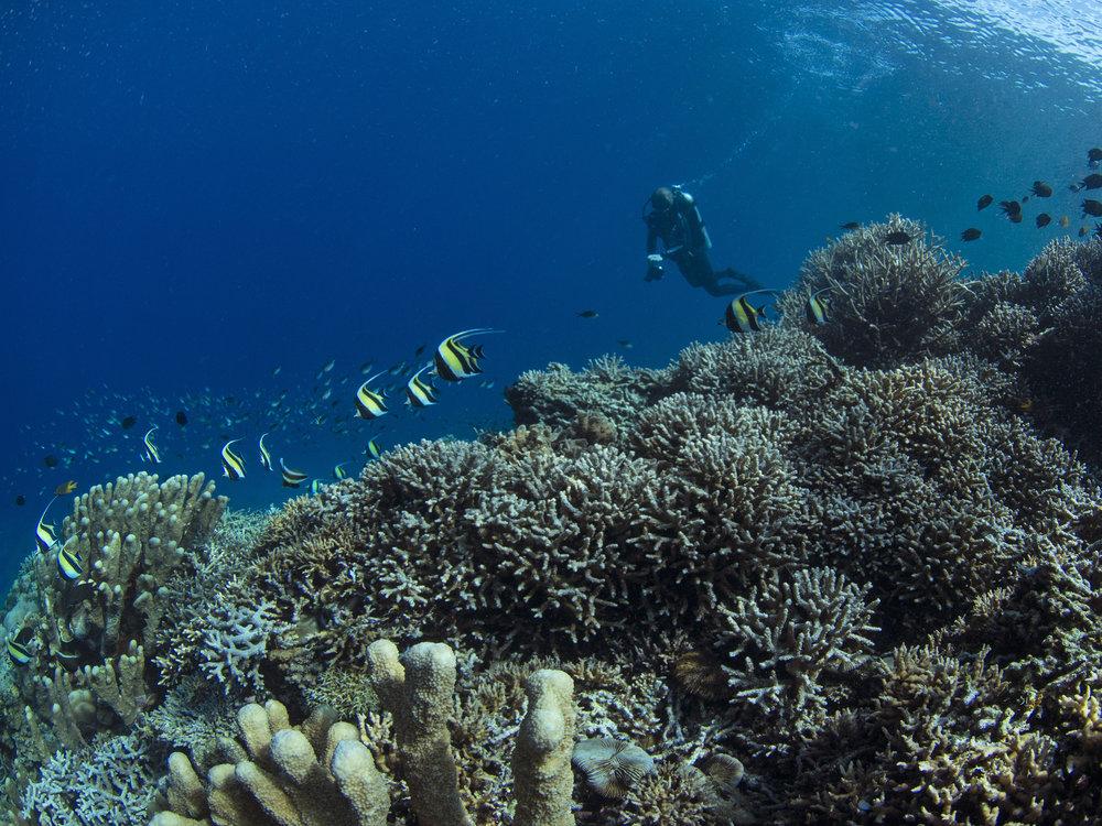 HEALTHY REEFS in manado ARE TEEMING WITH LIFE CREDIT: THE OCEAN AGENCY / PAUL G. ALLEN PHILANTHROPIES