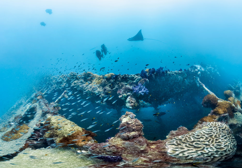 the yongala wreck, great barrier reef credit; the ocean agency/ coral reef image bank