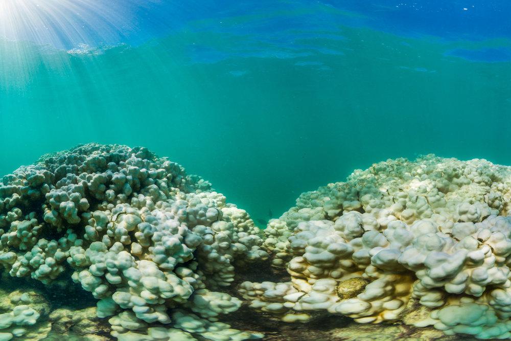 hawaii credit: the ocean agency / coral reef image bank