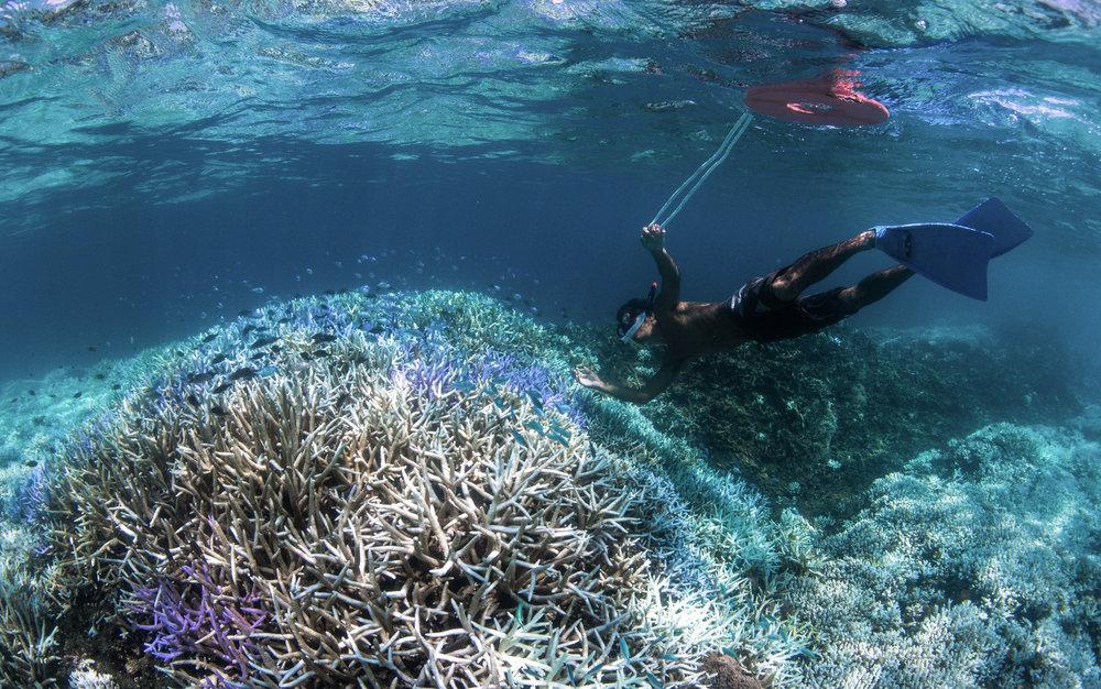 okinawa, japan credit: the ocean agency / coral reef image bank