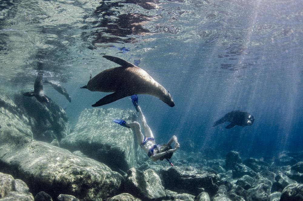 seals in the galapagos credit: Amanda cotton / coral reef image bank