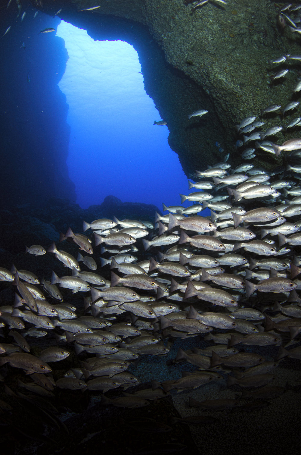 school swimming amanda cotton / coral reef image bank