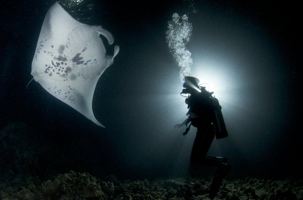 manta ray credit: amanda cotton/ coral reef image bank