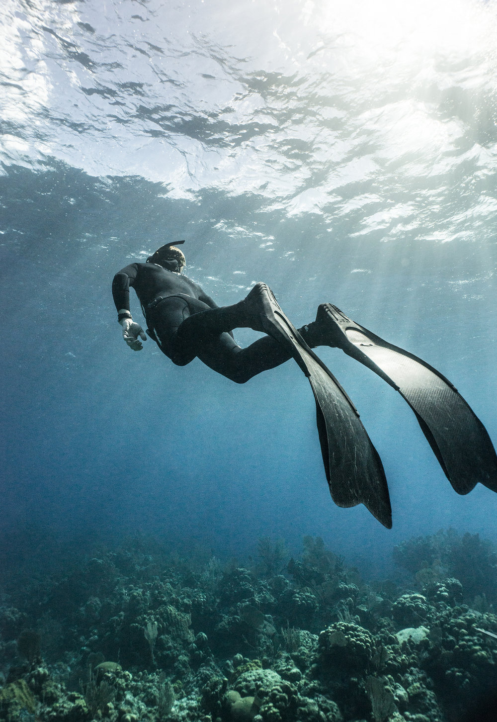 freediver credit: Amanda cotton / coral reef image bank