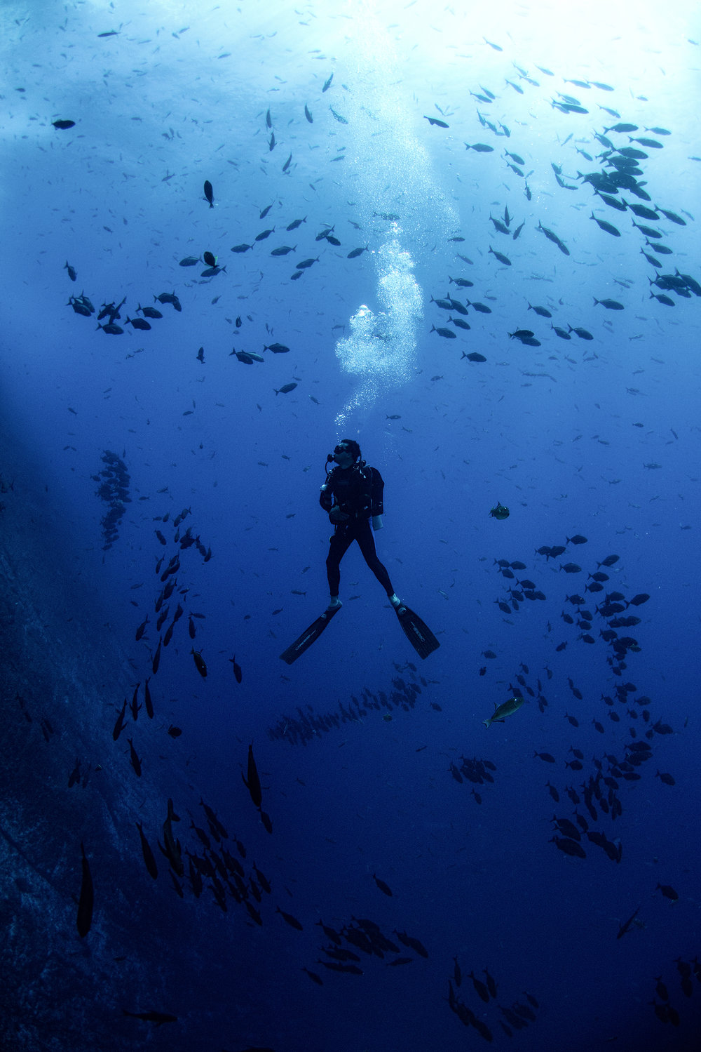 diver surrounded by schools of fish credit: Amanda cotton / coral reef image bank