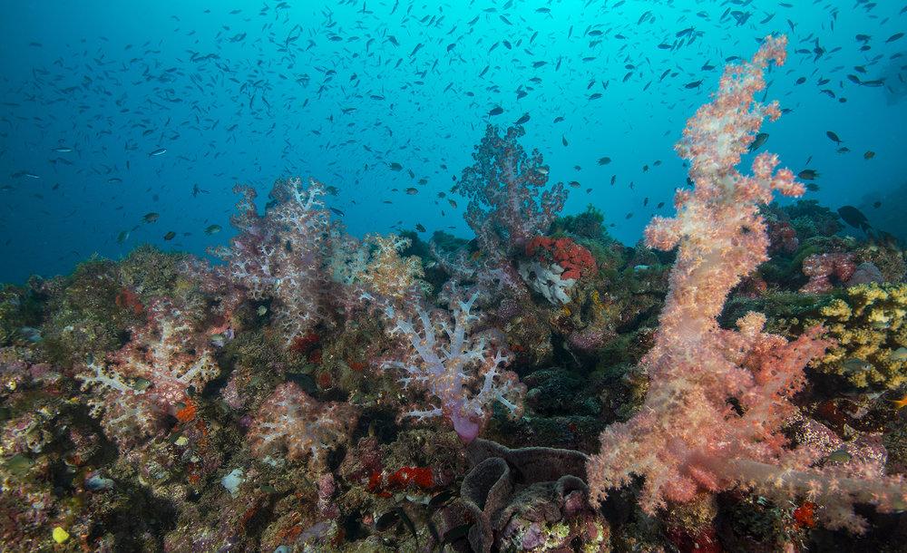 FIJI credit: Jayne Jenkins / coral reef image bank