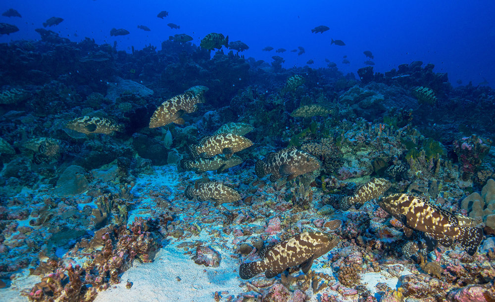 tahiti credit: Jayne Jenkins / coral reef image bank