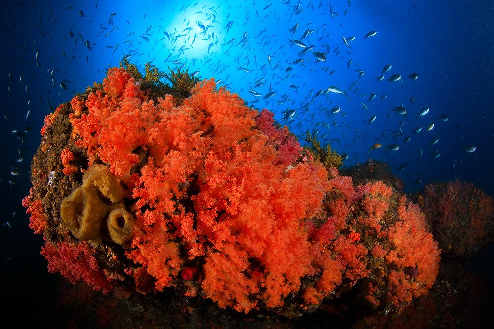 Badouzi, Taiwan credit: yen-yi lee / coral reef image bank