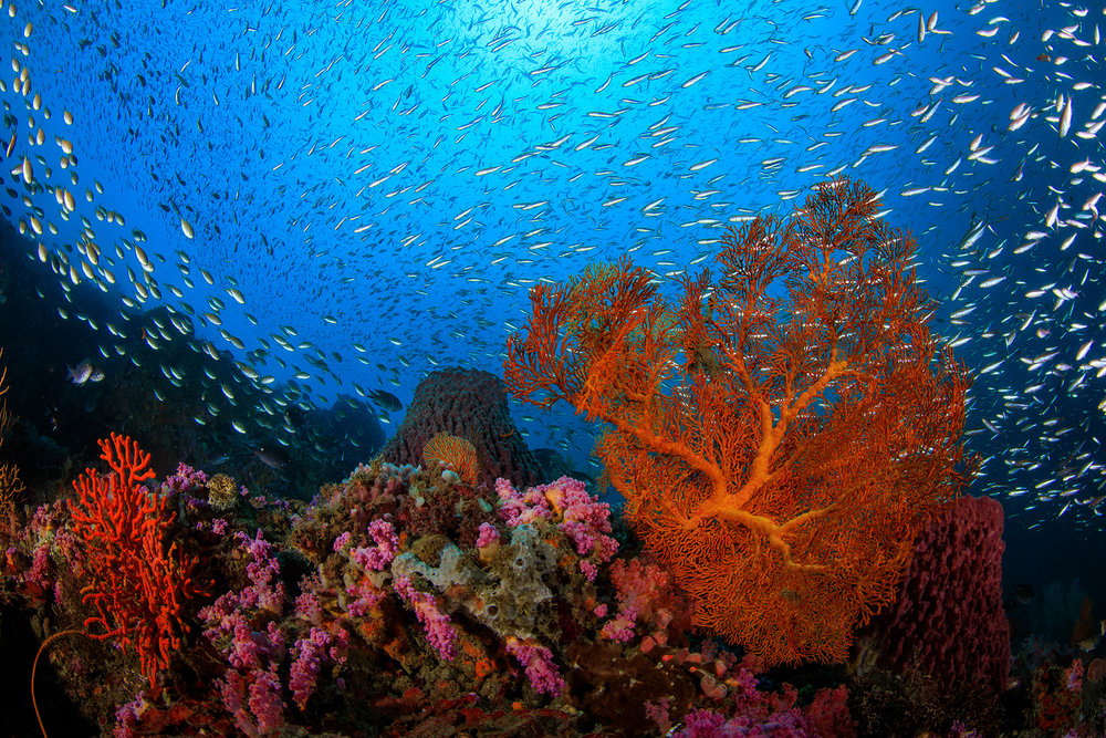Yehliu, Taiwan credit: yen-yi lee / coral reef image bank