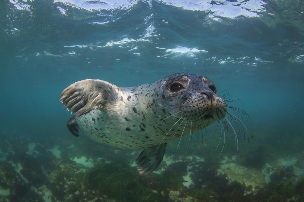 seal credit: Jeff hester / coral reef image bank