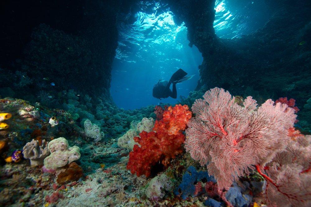 the window, raja ampat credit: gregory piper / coral reef image bank