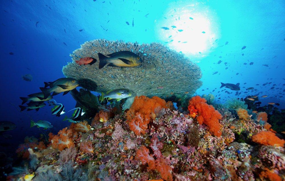 komodo, indonesia credit: gregory piper / coral reef image bank