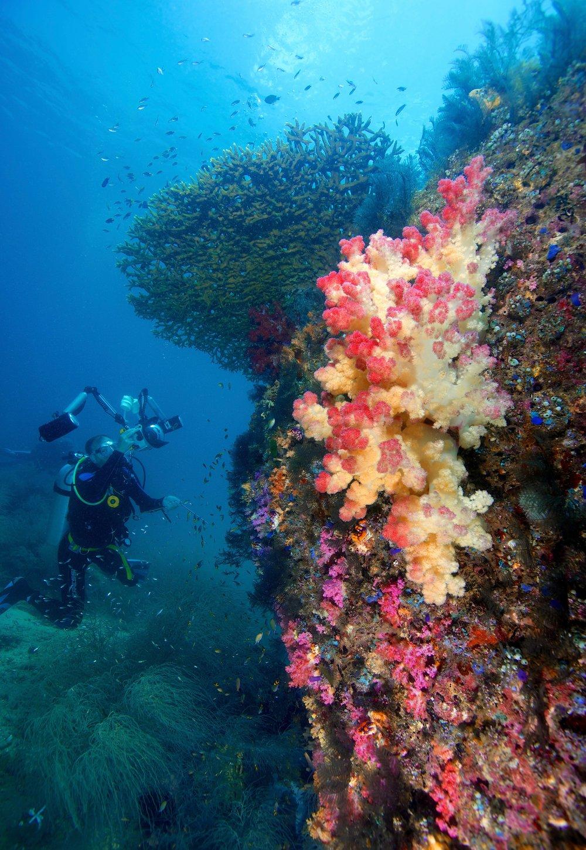 triton, raja ampat credit: gregory piper / coral reef image bank