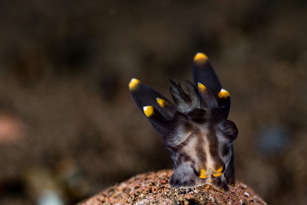 CREDIT: Wojtek Meczynski / coral reef image bank