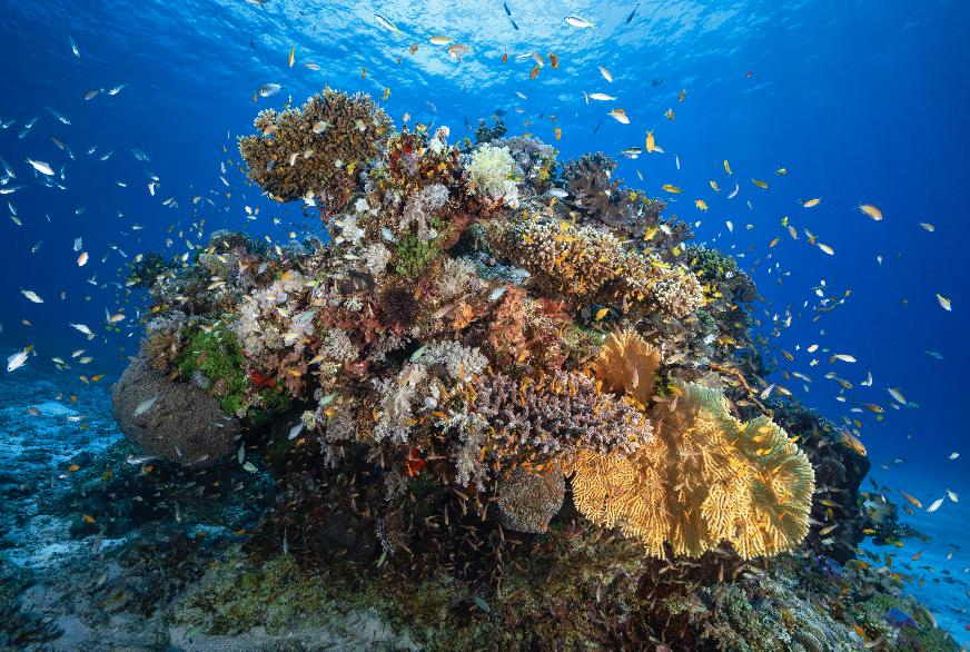 mayotte island CREDIT: GABY BARATHIEU / CORAL REEF IMAGE BANK