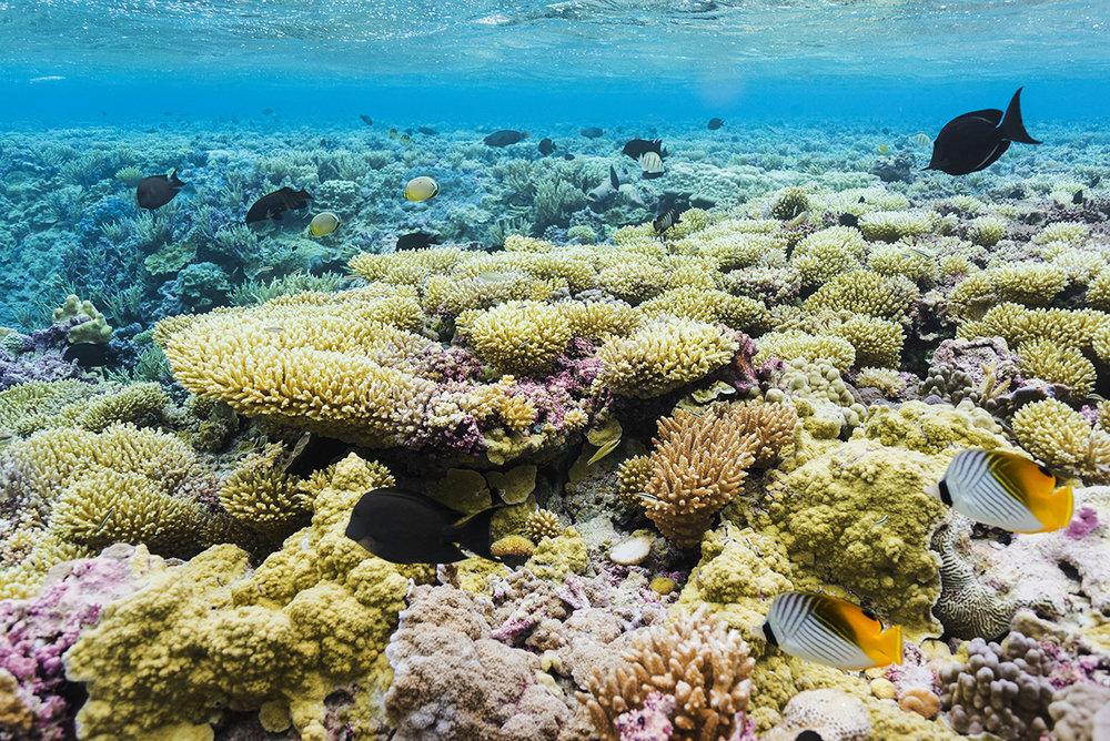 barren Island, pAlmYRA ATOLL credit: USFWS / Coral reef image bank