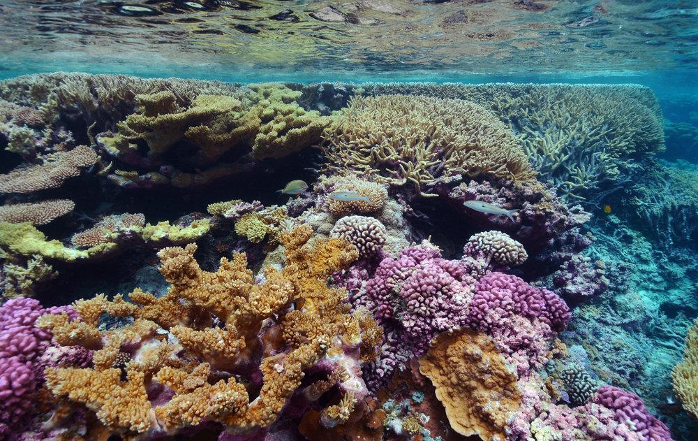 PAlmYRA ATOLL credit: kydd pollock / USFWS / Coral reef image bank