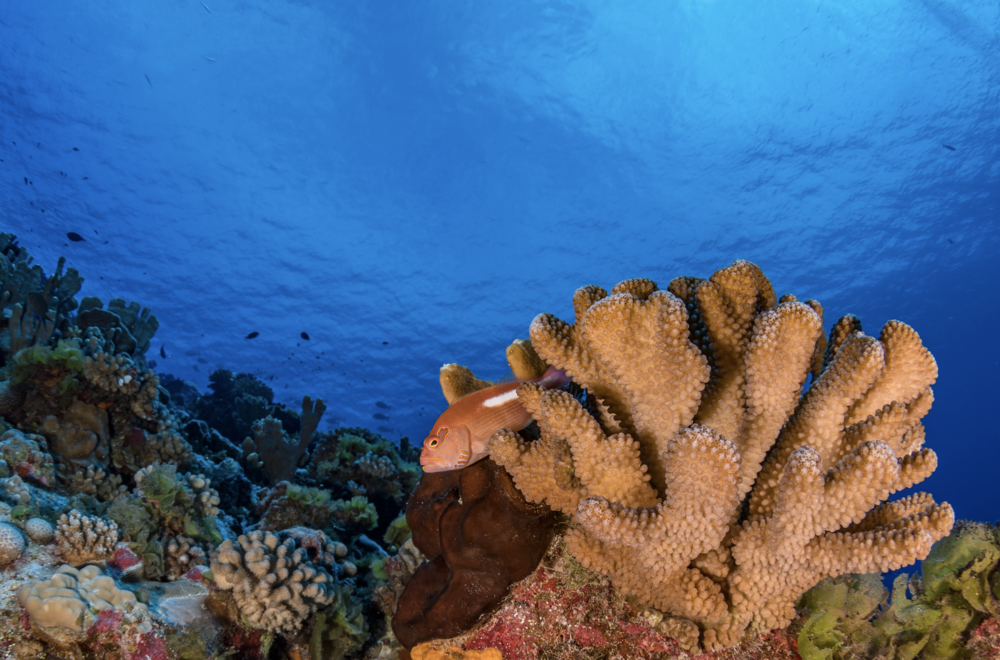 french polynesia credit: Hannes Klostermann / coral reef image bank