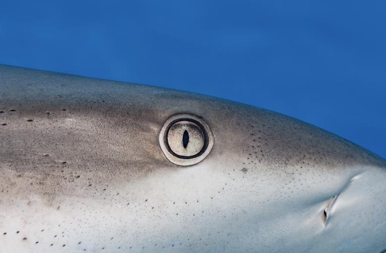 shark eye in bahamas credit: hannes klostermann / coral reef image bank