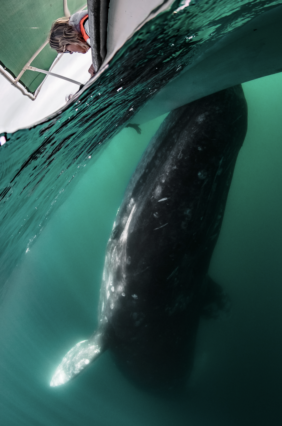 whale under boat credit: hannes klostermann / coral reef image bank