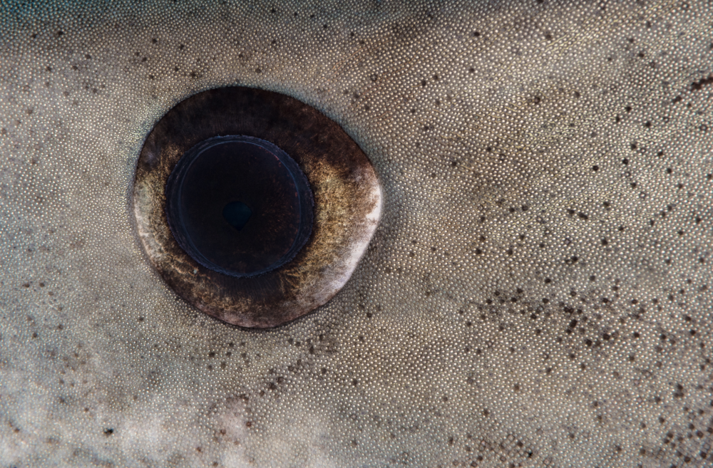bahamas credit: hannes klostermann / coral reef image bank