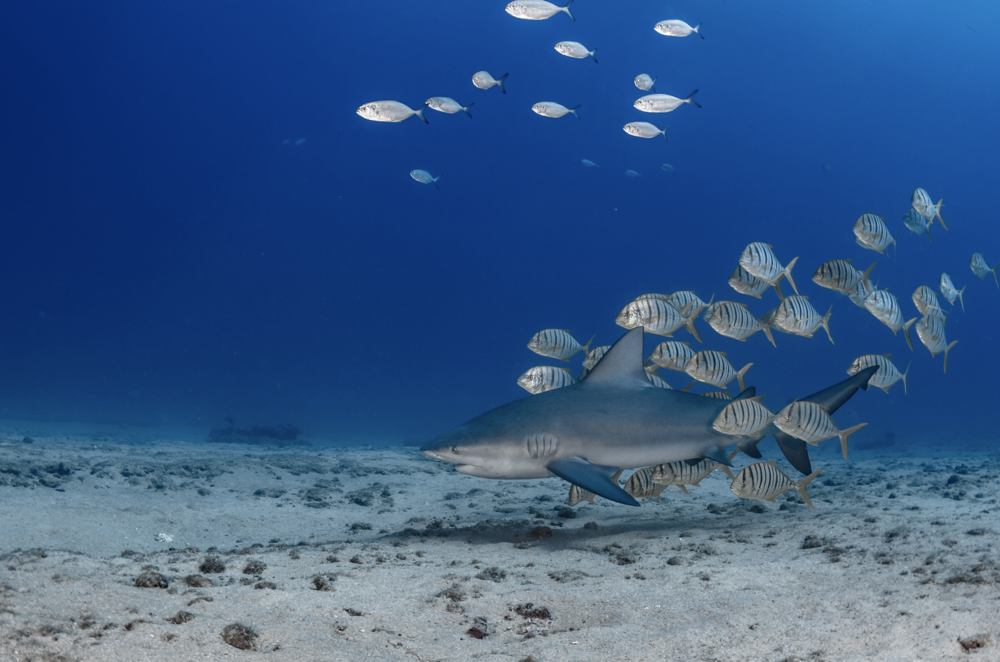 baja california credit: hannes klostermann / coral reef image bank