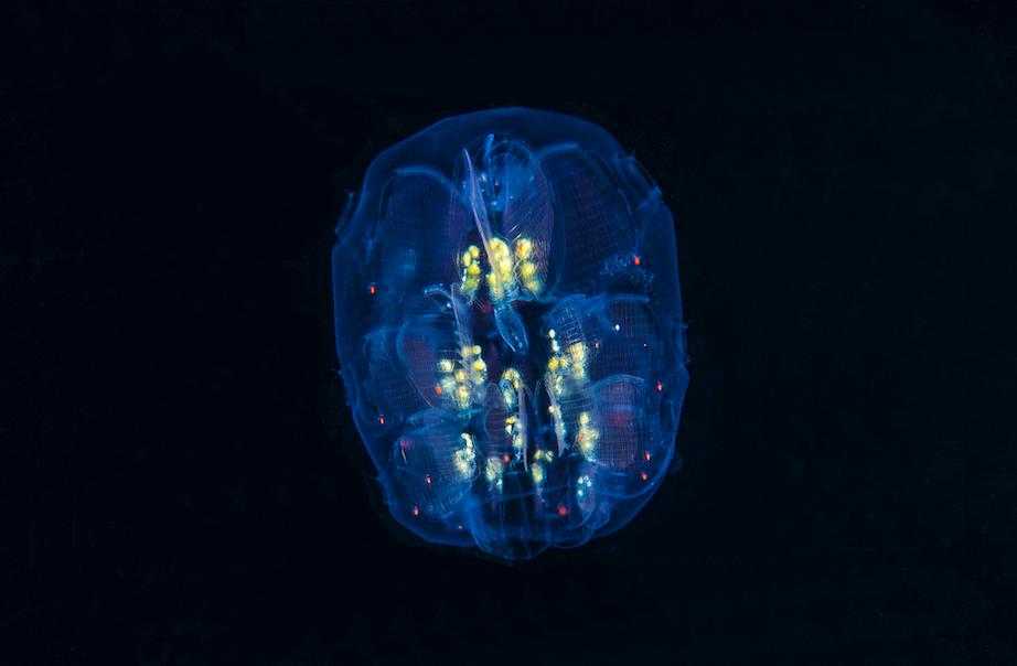 blackwater credit: richard barnden / coral reef image bank