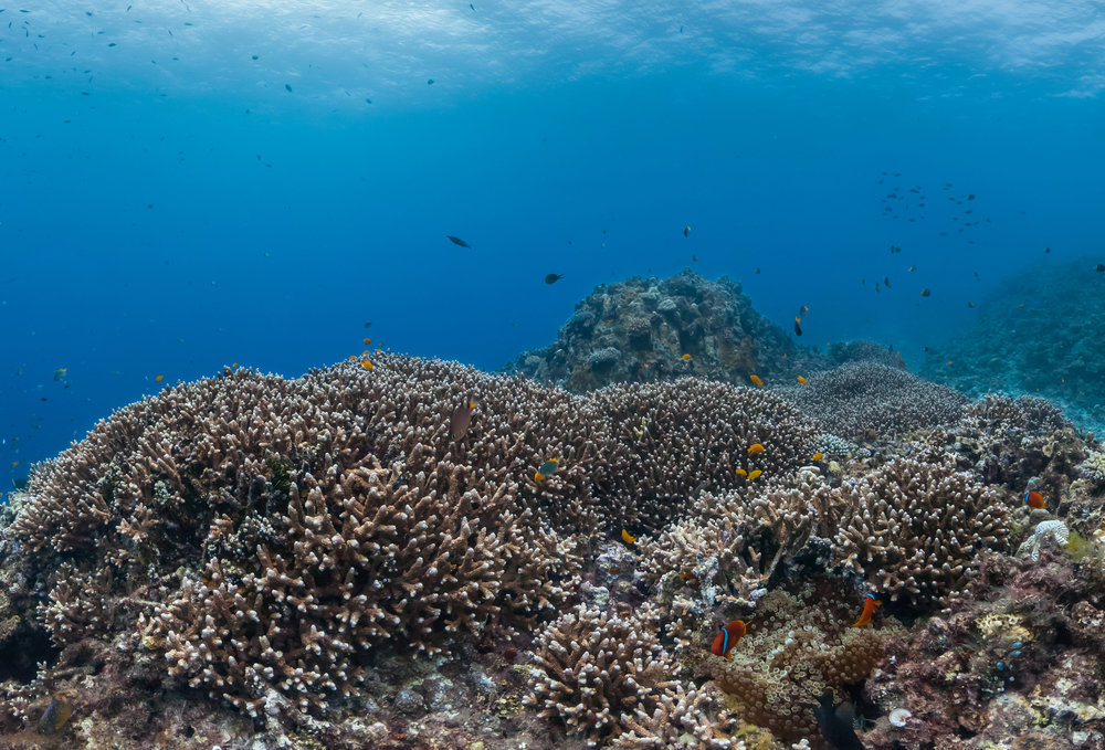 kerama, okinawa, Japan CREDIT: THE OCEAN AGENCY / CORAL REEF IMAGE BANK