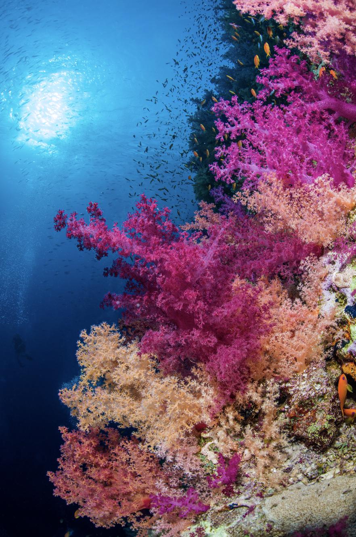 red sea CREDIT: brook peterson / coral reef image bank