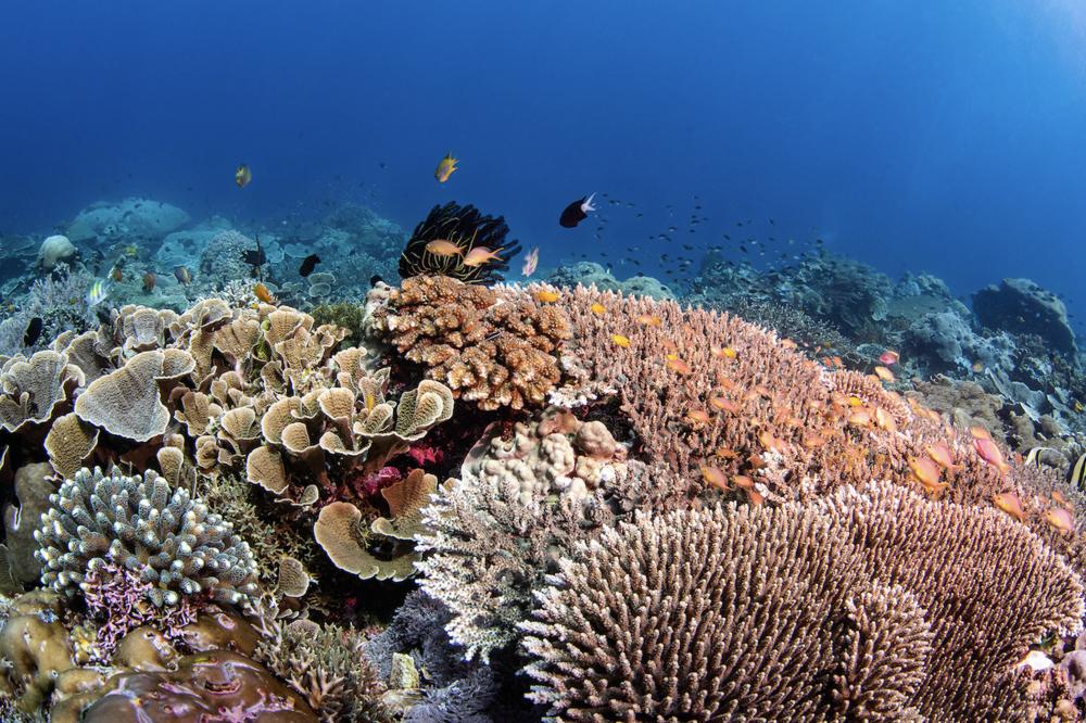 raja ampat CREDIT: brook peterson / coral reef image bank