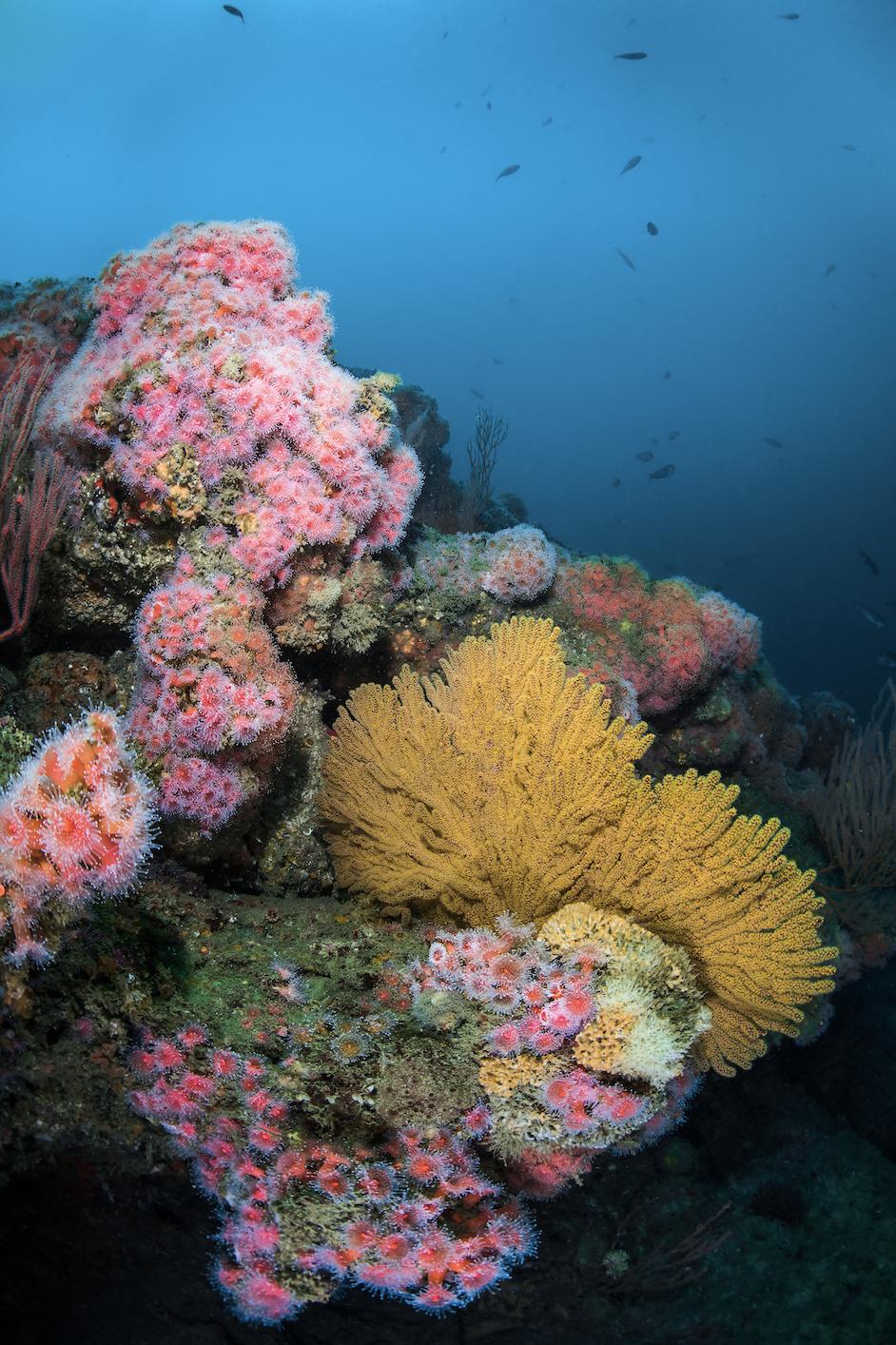 california coast credit: brook peterson / coral reef image bank