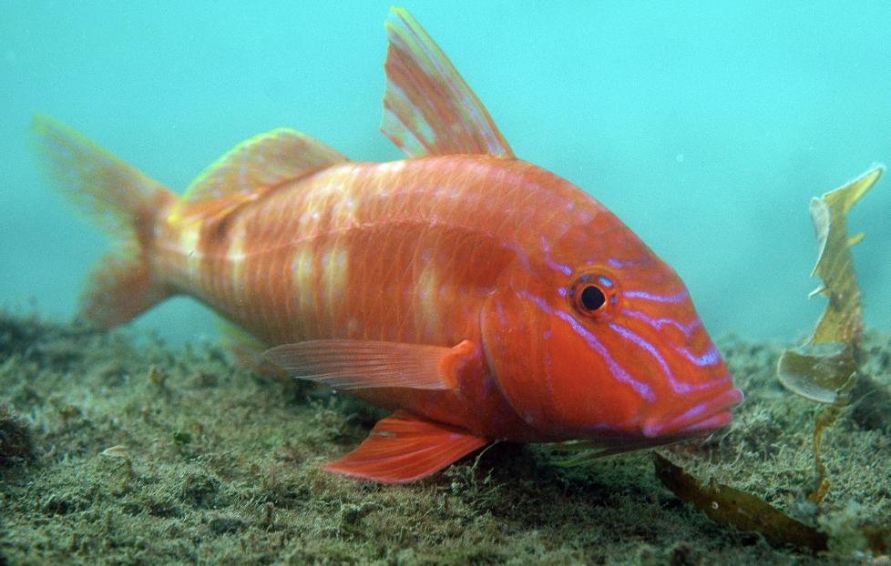 fish credit: the ocean agency / coral reef image bank