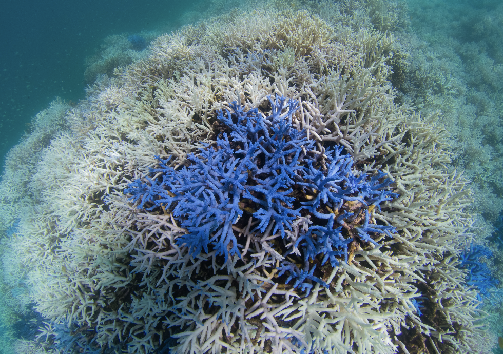 new caledonia, MARCH 2016 credit: the ocean agency / xl catlin seaview survey
