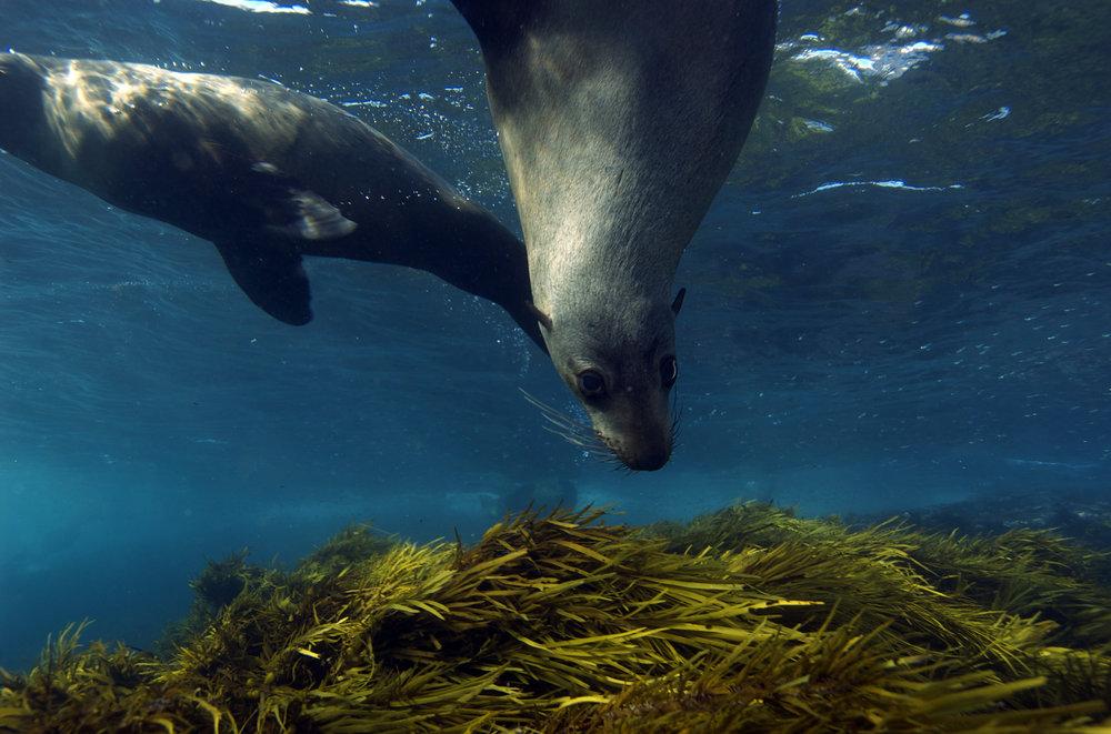 GALAPAGOS SEA LIONS CREDIT: THE OCEAN AGENCY / coral reef image bank