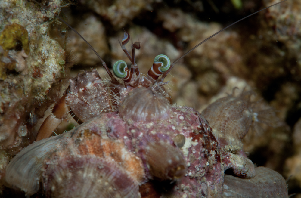 CREDIT: jayne jenkins / coral reef image bank