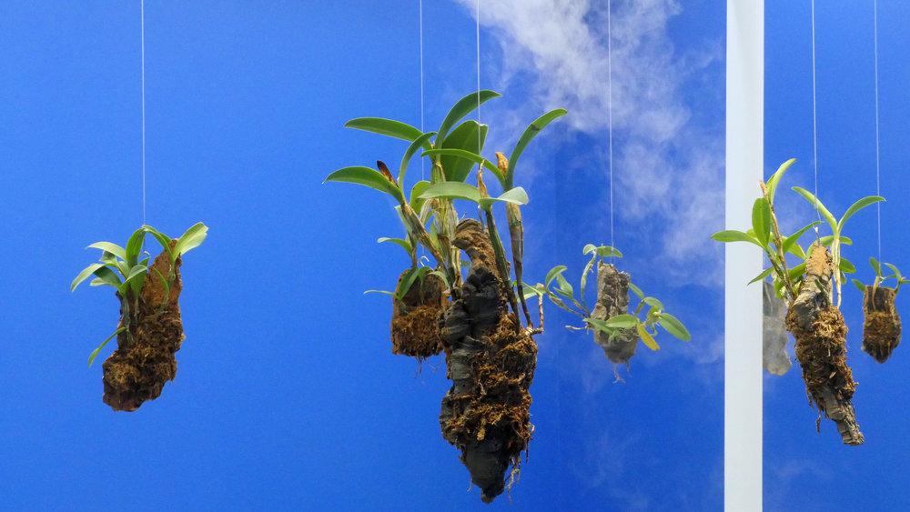 orchids7.jpg