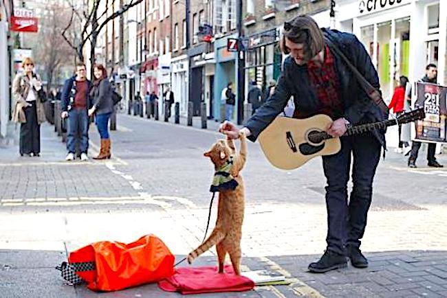 street-cat-Bob.jpeg