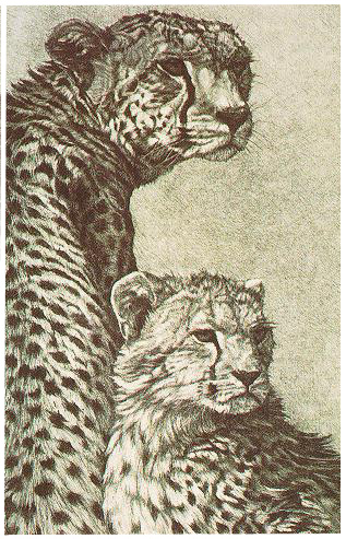 """Cheetah Mother and Cub"""