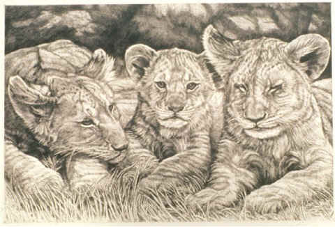 """Three Lion Cubs"""