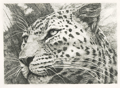 "Leopard Portrait""   by Dennis Curry"
