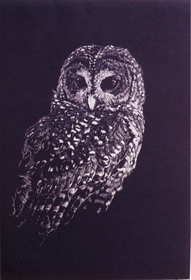 Short Ear Owl -