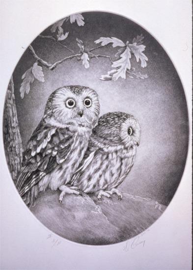saw_whet_owls.jpg
