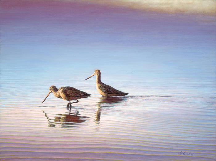 """Godwits""  by Dennis Curry   While kayaking the waters of California's Morro Bay I was struck by the quality of light piercing the fog to highlight these winter visitor against the cool, diffuse background and still waters of the bay."