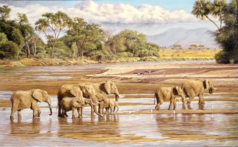 """Walking the Uaso Nyiro""  by Dennis Curry   The Uaso Nyiro (brown river) in Kenya's Samburu game reserve draws wildlife from the entire area and is one of the best places to meet Elephants."