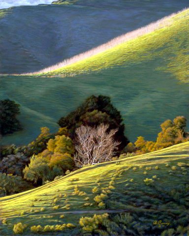 """""""The Light and Dark of Things""""   by Dennis Curry    Sunlit ridges contrast with deep shadows, highlighting the still standing grasses of the last season and the lush growth of the new."""