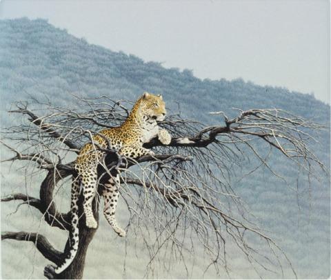 """Samburu Leopard""   by Dennis Curry"