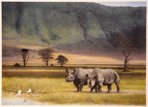 """Companions of Ngorongoro""   by Dennis Curry    Set in Tanzanias' great Ngorongoro Crater, Companions depicts a pair of black rhinos; in a tree in the background vultures are a reminder of their threatened status. The sunlit egrets in the foreground engender hope."