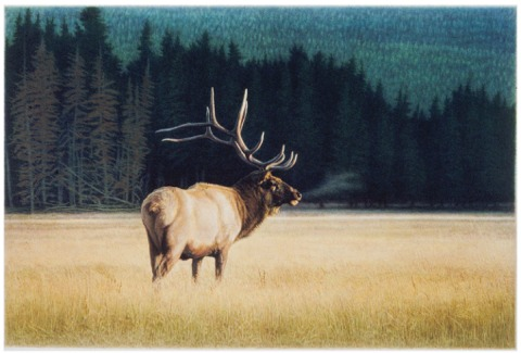 """Evensong""  -Artist's Yellowstone Portfolio -   by Dennis Curry"