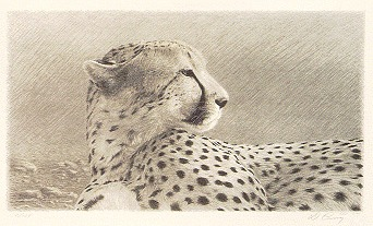 """""""Duma, State II""""   by Dennis Curry    Duma, Swahili for cheetah. Created with the three main drawings from the color edition, Duma in presented with the simple elegance of black and white."""